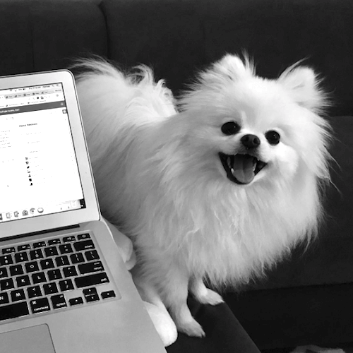 computer with white dog